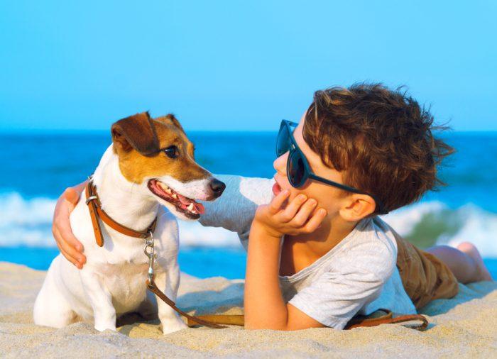 Os melhores hotéis de praia para viajar com o seu animal de estimação