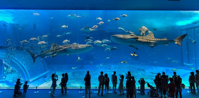 Descubra os oceanários mais espetaculares, que o deixarão boquiaberto