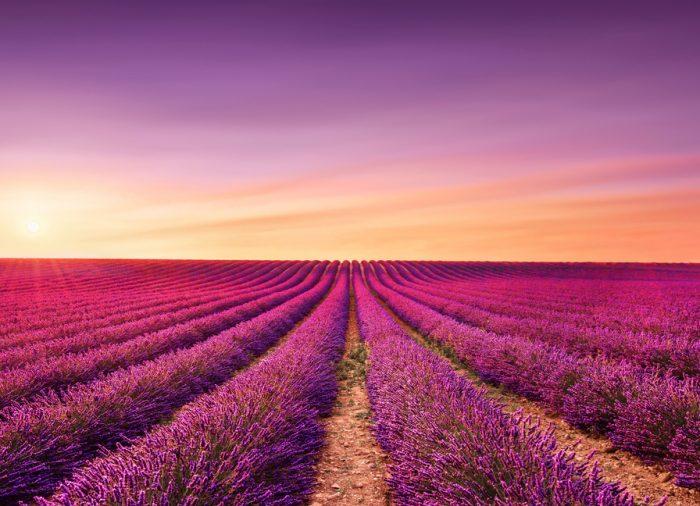A romântica rota da alfazema na Provença